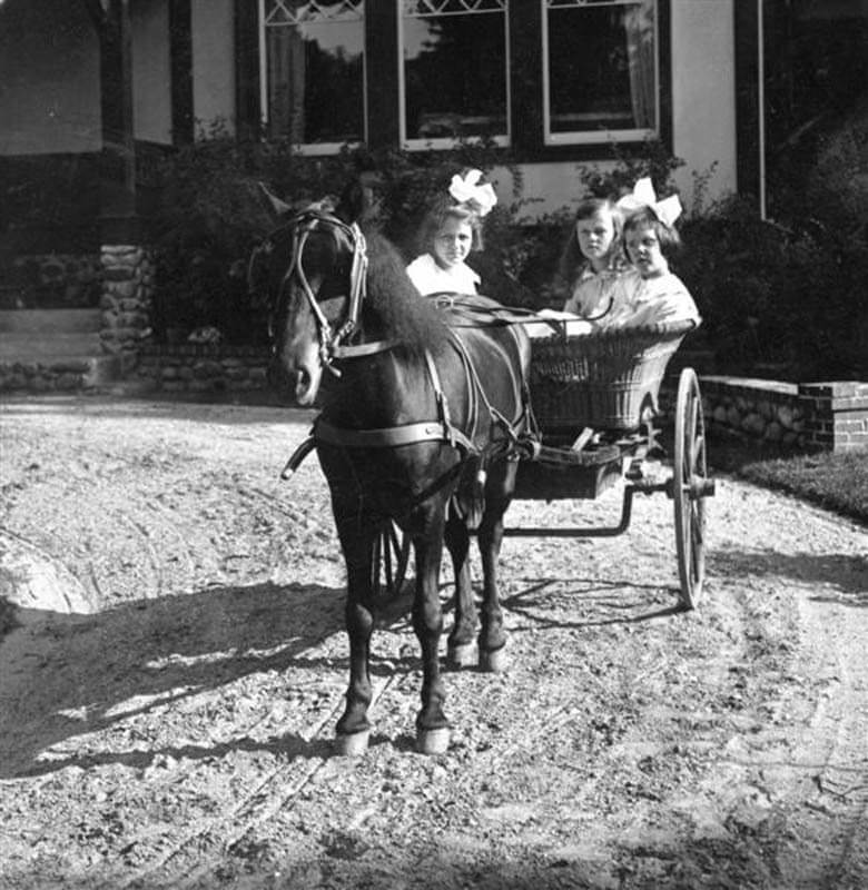 Three girls in horse drawn cart